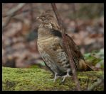 Cades Cove Bird by lamsquaw