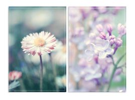 floral. by emshh