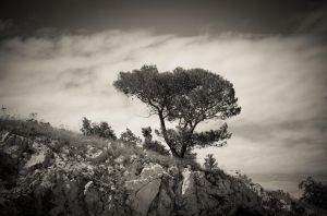 Lonely tree by keks3