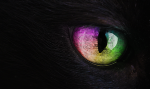 Cat's Eye by exxodium