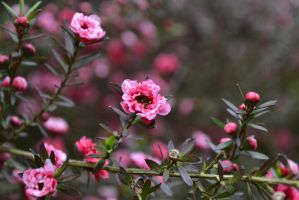 Pink Macro Bush by edthefred