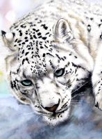 Snow Leopard Closeup by ZhaoT