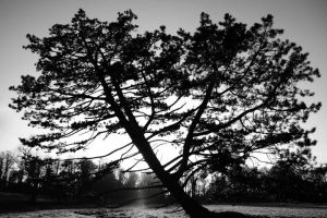 Walsingham Tree by Coigach