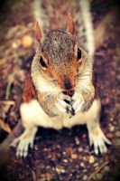 Squirrel by zeravla