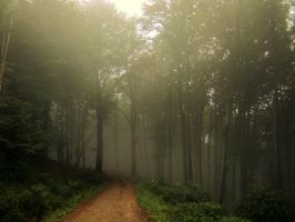 spooky forest by Tallon-1