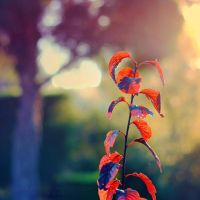 Leaves of Autumn by FlabnBone