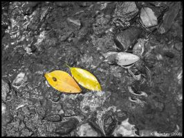 Coloured Leaves by p858snake