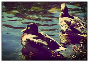 the duck's bathe... by BeDd