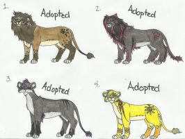 8 pts. Lion Adoptables .:Closed:. by Jennidash