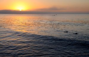 Dawn Patrol Paddle Out by Allen59
