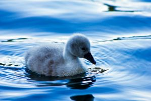 Baby Blue by akrPhotography
