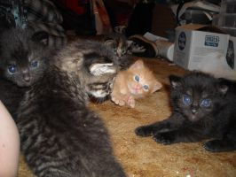 LOOKIT MY KITTENS MORE by Critical-Error