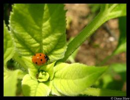 ladybug and the ant by ButterflyBlew