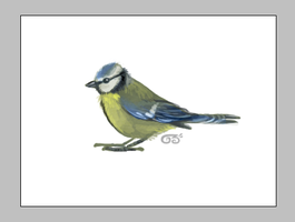 Bluetit by griffsnuff