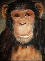 The Chimp by Lynne-Abley-Burton