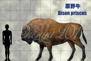 Bison priscus by sinammonite