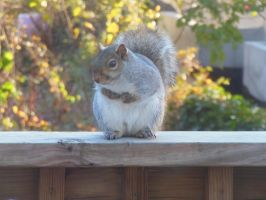 Photography - Squirrel 1: Front by watermelemon