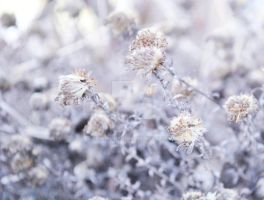Frozen Dried Flowers by sibeworld