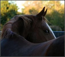 Pose by Phantom303