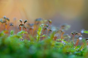 Tiny little forest by Pamba