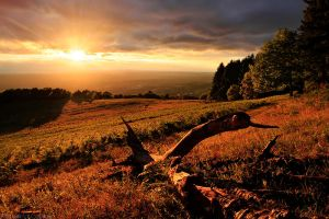 Paint it Gold by FlorentCourty