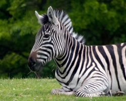 More Than Stripes by AngelaLeonetti