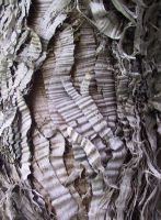 Tree Bark Texture 2 by Falln-Stock