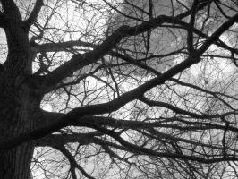 branches by fraserw2