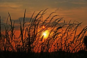 Fields on Fire by Capturing-the-Light