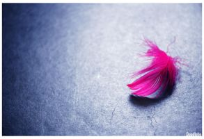 Feather of Magenta by DoodleBe