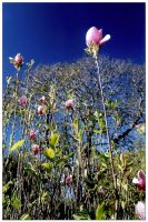 Rising Flower by exoart