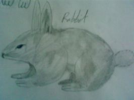 Rabbit2 by WinterWonderer1