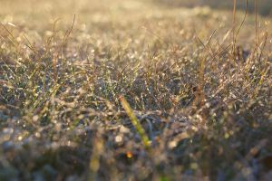 Frozen grass by perost
