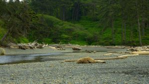 Ruby Beach, Olympic Peninsula, Washington VI by PamplemousseCeil
