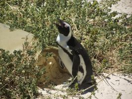 Penguin on Beach by Skarkdahn