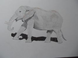 elephant sketch by PaulDS89