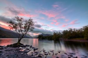Padarn Tree by CharmingPhotography