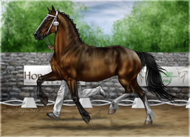 Ambassador Inspection by Tigra1988