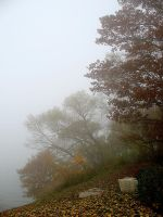 Foggy Afternoon by mskooey