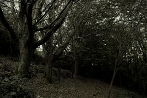 Line of trees by WillJH