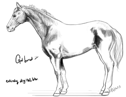Incomplete horse sketch by Coraleat