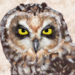 Asio Flammeus | Short Eared Owl by VisualCondyle