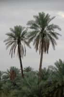 Beyond Two Palm Trees by linkq