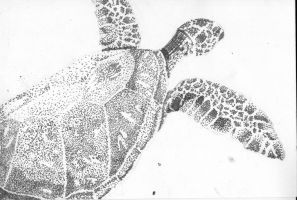 Turtle by Minthia