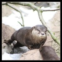 Otter 2 by Globaludodesign