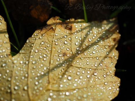 Veins and droplets by rjbailey