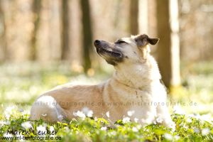 the smell of spring by Maaira