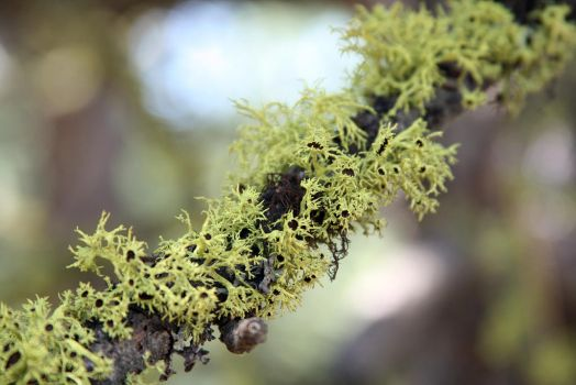 Moss growing on a tree limb 2 by coldmist1
