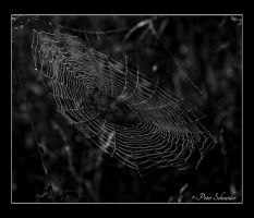 The web. by Phototubby