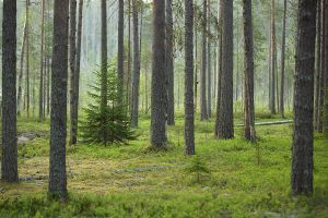 Walk in the forest before the sun goes up by DeingeL